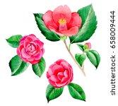 wildflower camellia japanese... | Shutterstock . vector #658009444