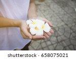 plumeria on hand frangipani... | Shutterstock . vector #658075021
