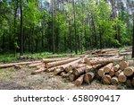 felled trees  trunks  pines in... | Shutterstock . vector #658090417