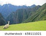 Machu Pichu Peru Llama