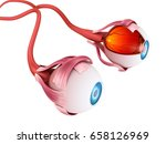 eye anatomy   inner structure ... | Shutterstock . vector #658126969