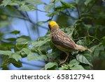 Small photo of Yellow-headed Yellow-headed Yellow