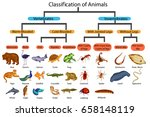 education chart of biology for... | Shutterstock .eps vector #658148119