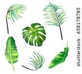 set of botanical vector... | Shutterstock .eps vector #658178785