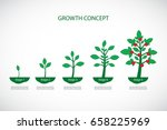 growth concept. plant growth...   Shutterstock .eps vector #658225969