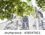Blossoming Linden Tree In Fron...