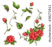 decorative hand drawn roses ... | Shutterstock .eps vector #658272811
