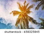 coconut tree and copy space sky ... | Shutterstock . vector #658325845