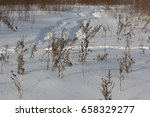 Dried Grass On Snow Covered...