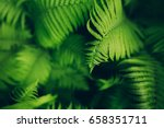 Beautyful Ferns Leaves Green...