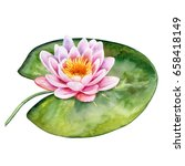 lotus. water lily isolated on... | Shutterstock . vector #658418149