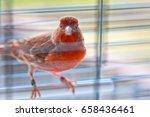 Small photo of Canary Canary