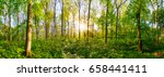 Forest In Spring With Green...