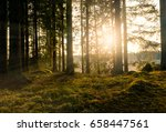 light rays in forest during... | Shutterstock . vector #658447561