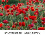 flowers red poppies blossom on... | Shutterstock . vector #658455997