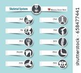 skeletal system . medical... | Shutterstock .eps vector #658477441