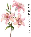 Watercolor Lilies Isolated On...
