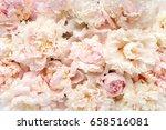 texture of pink and beige buds...   Shutterstock . vector #658516081