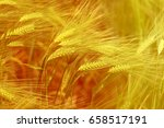 photo of a macro of a wonderful ...   Shutterstock . vector #658517191