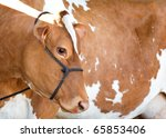 A red Holstein Friesian dairy cow profile and body. - stock photo