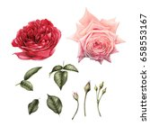 flowers and leaves   can be...   Shutterstock . vector #658553167
