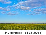 field of blooming sunflowers on ... | Shutterstock . vector #658568065