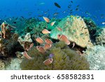 a family of anemonefish stay on ... | Shutterstock . vector #658582831