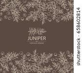 background with juniper ... | Shutterstock .eps vector #658602814