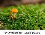 Tiny Orange Mushroom Growing I...