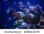 tropical fish with corals and... | Shutterstock . vector #658663255