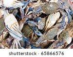 Close Up Of Blue Flower Crab I...