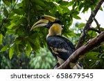 hornbill on the green tree in... | Shutterstock . vector #658679545