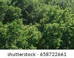 treetops aerial top view green...   Shutterstock . vector #658722661