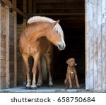 Stock photo red horse and rhodesian ridgeback puppy on the black background 658750684