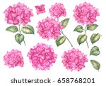 Collection Of Hydrangea Flower...