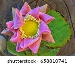 lotus flower floating in the... | Shutterstock . vector #658810741