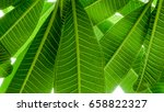 yellow detail of  of green leaf ... | Shutterstock . vector #658822327