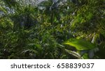 seychelles  praslin  nature... | Shutterstock . vector #658839037