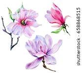 wildflower magnolia flower in a ... | Shutterstock . vector #658868515