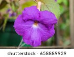 Small photo of Purple achimenes flower. Achimenes has a multitude of common names such as magic flowers, widow's tears, Cupid's bower, or hot water plant.