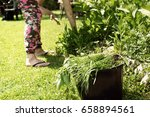 female pulling the weeds out in ... | Shutterstock . vector #658894561