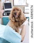 lady veterinary with a cocker...   Shutterstock . vector #65890576