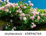 roses flowers | Shutterstock . vector #658946764