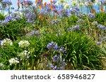 flowers on meadow | Shutterstock . vector #658946827