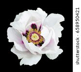 Stock photo white peony flower macro photography isolated on black 658950421