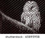 an owl behind bars | Shutterstock . vector #65895958