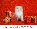 Ragdoll Kitten With Red...