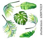 set of botanical vector... | Shutterstock .eps vector #658974319