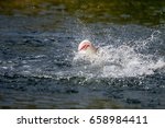 barramundi jumps into the air... | Shutterstock . vector #658984411