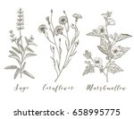 vector hand drawn collection of ... | Shutterstock .eps vector #658995775
